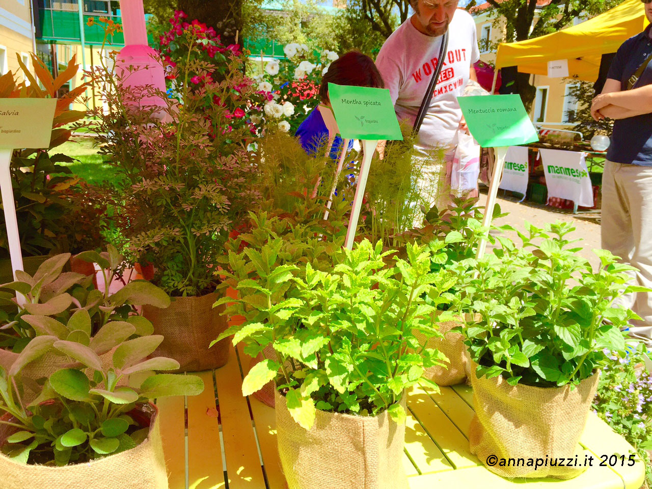 Erbe aromatiche bio